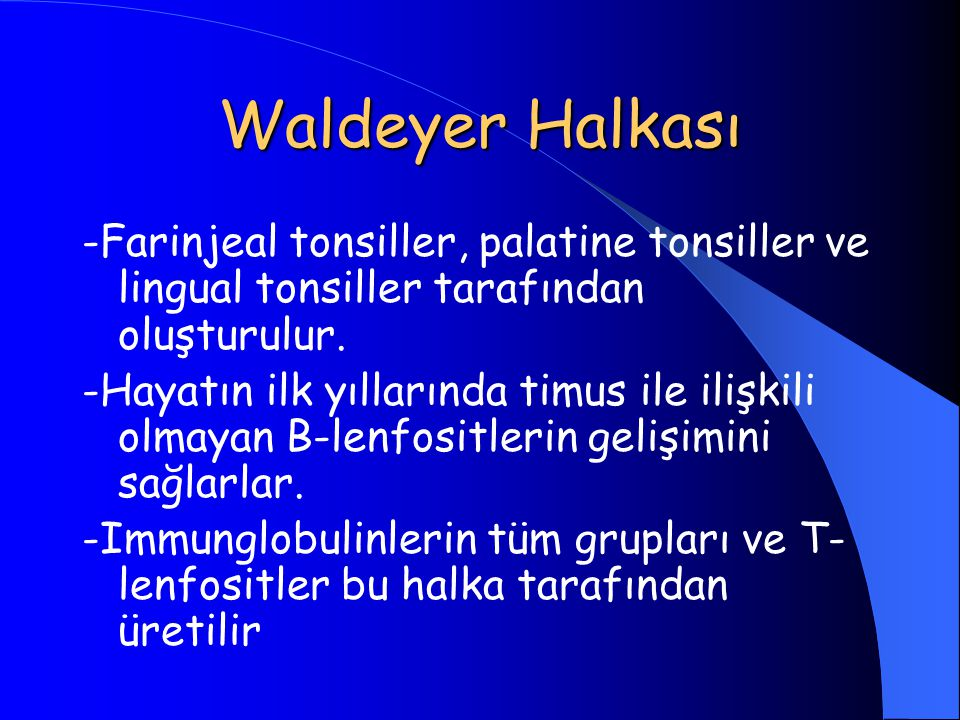 Waldeyer Halkası -Farinjeal tonsiller, palatine tonsiller ve lingual tonsiller tarafından oluşturulur.