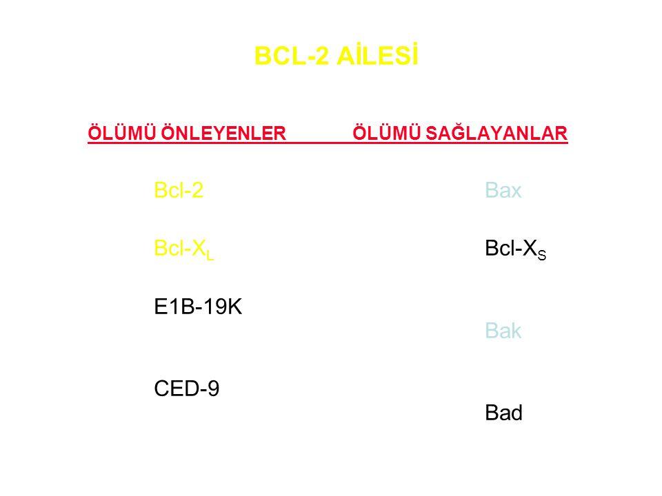 BCL-2 AİLESİ Bcl-2 Bax Bcl-XL Bcl-XS E1B-19K Bak CED-9 Bad