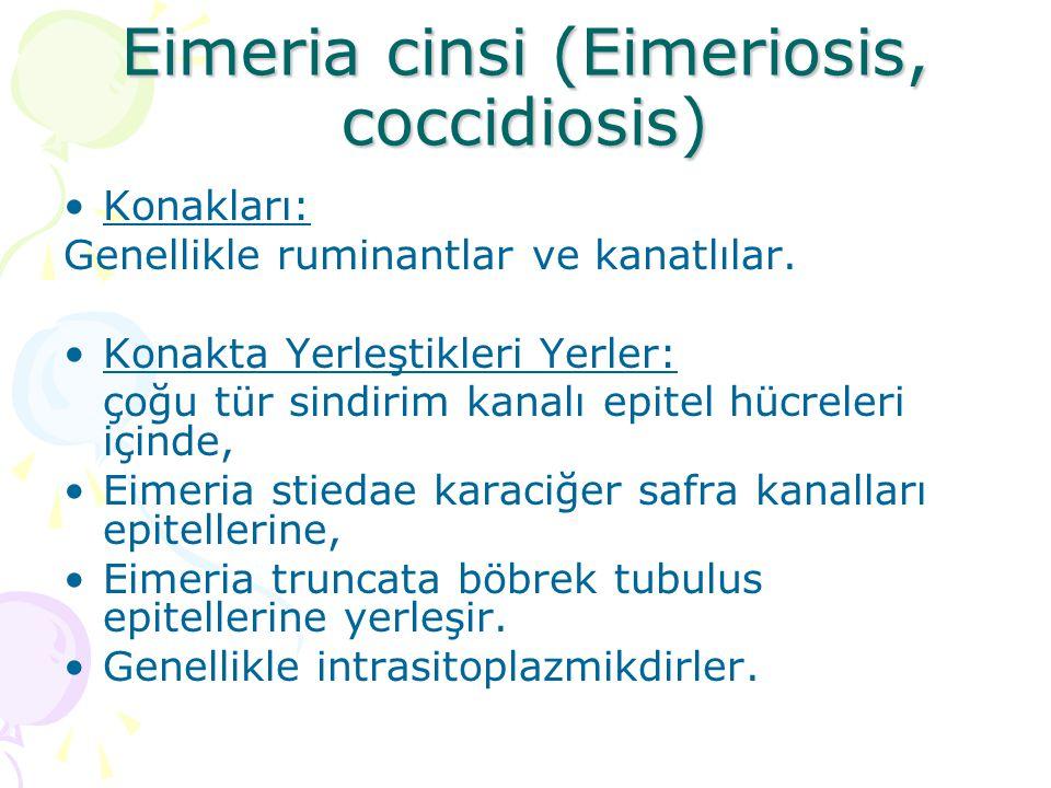 Eimeria cinsi (Eimeriosis, coccidiosis)