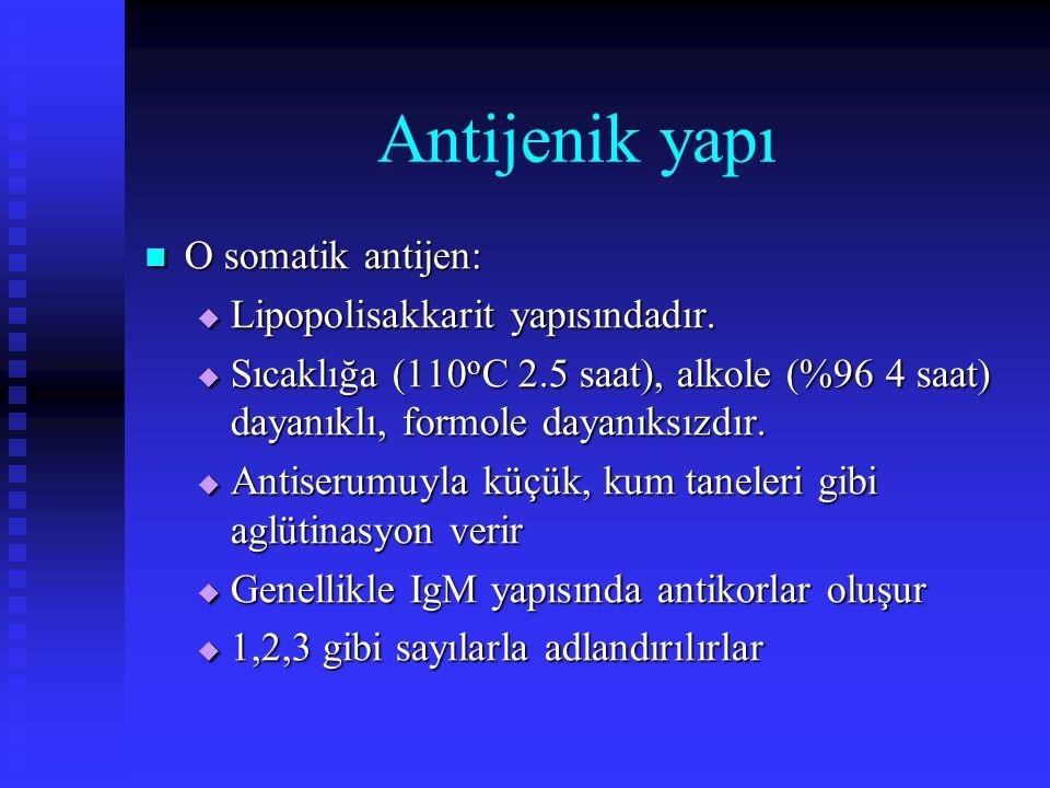 Antijenik yapı O somatik antijen: Lipopolisakkarit yapısındadır.