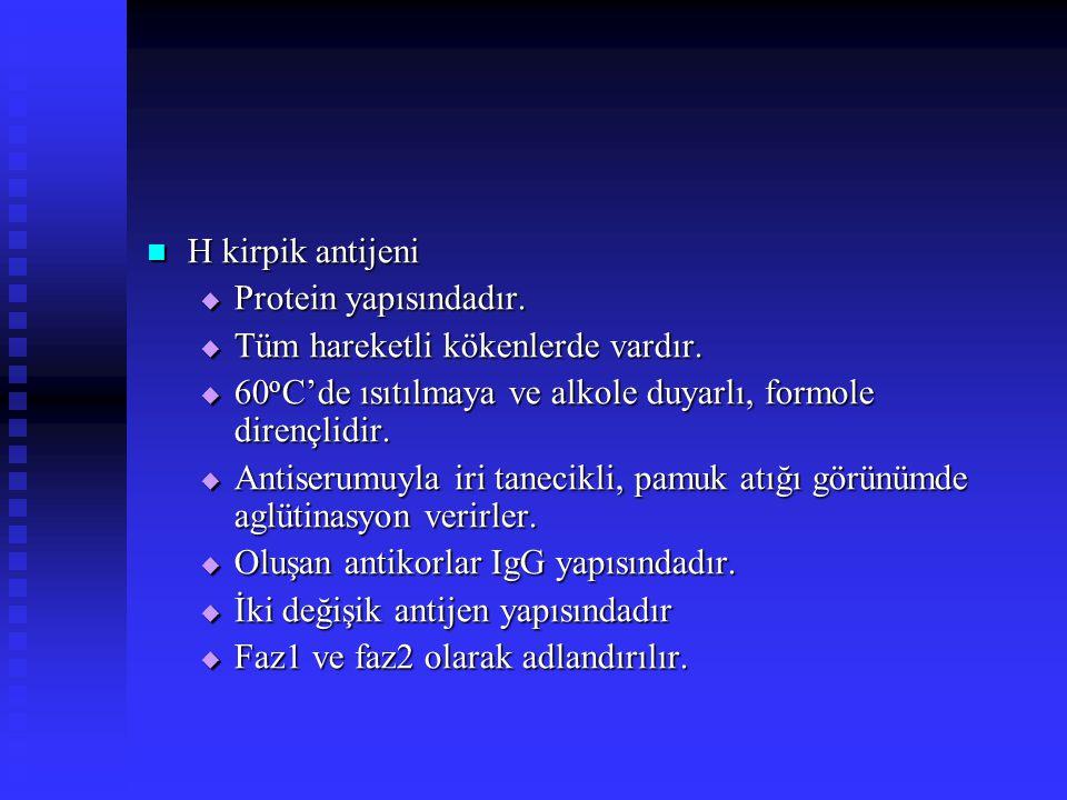 H kirpik antijeni Protein yapısındadır. Tüm hareketli kökenlerde vardır. 60oC'de ısıtılmaya ve alkole duyarlı, formole dirençlidir.