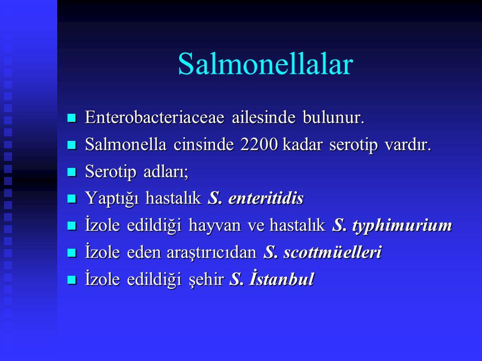 Salmonellalar Enterobacteriaceae ailesinde bulunur.