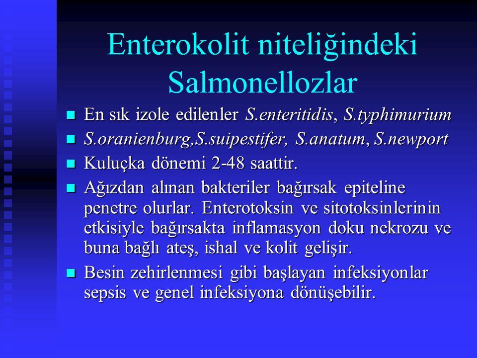 Enterokolit niteliğindeki Salmonellozlar