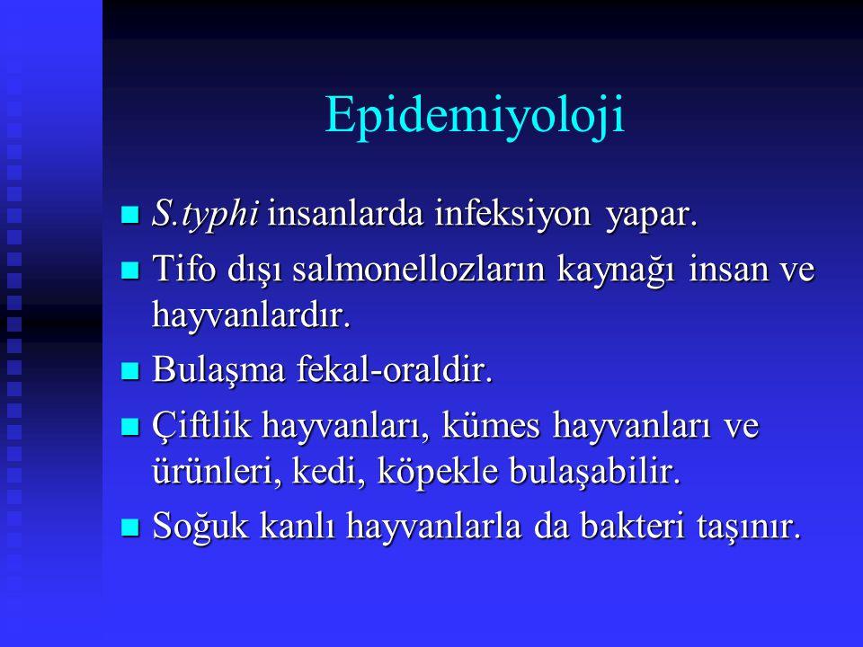Epidemiyoloji S.typhi insanlarda infeksiyon yapar.