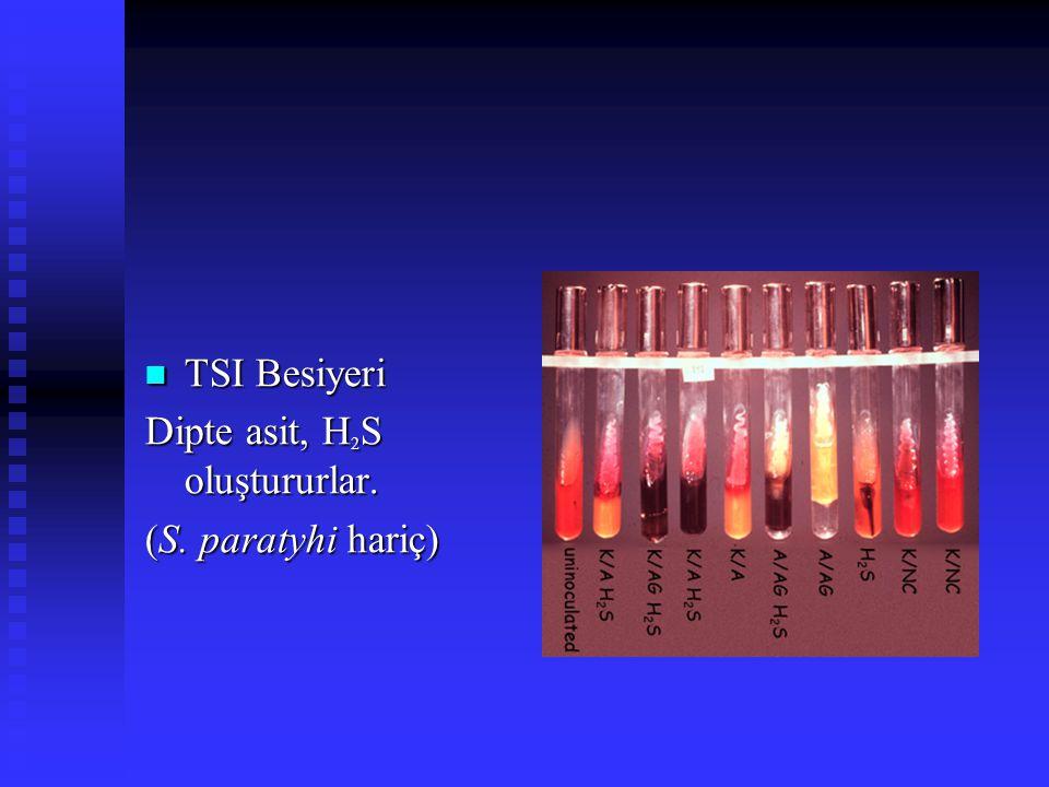 TSI Besiyeri Dipte asit, H2S oluştururlar. (S. paratyhi hariç)
