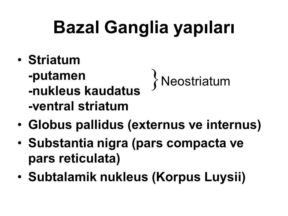 Bazal Ganglia yapıları