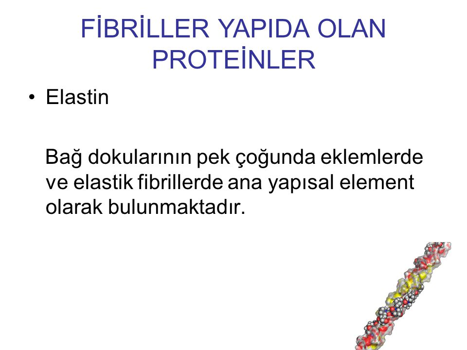 FİBRİLLER YAPIDA OLAN PROTEİNLER