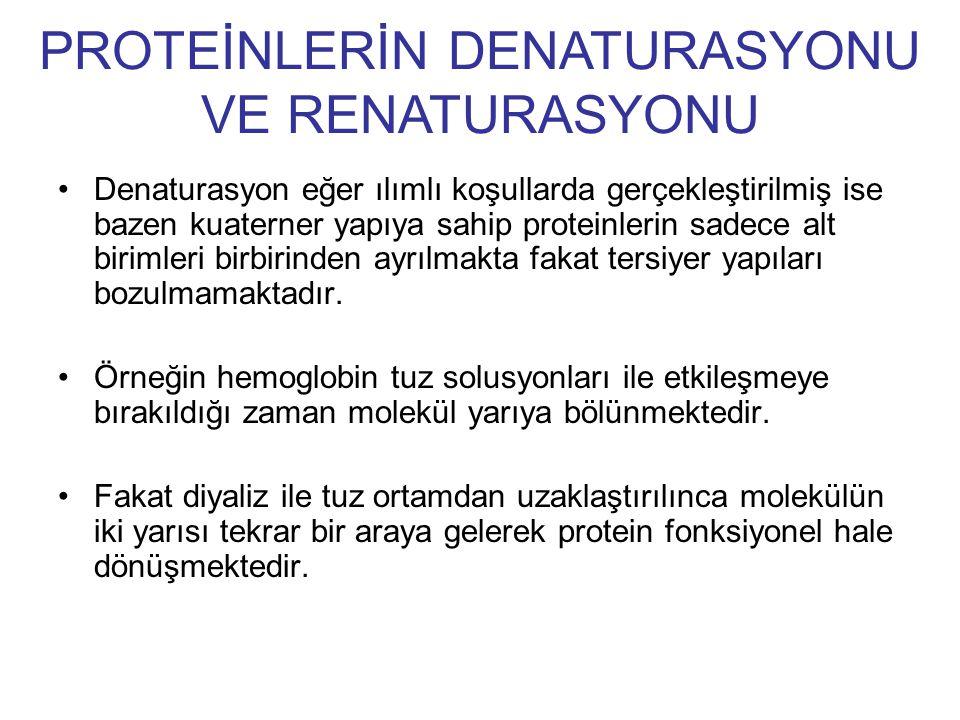 PROTEİNLERİN DENATURASYONU VE RENATURASYONU