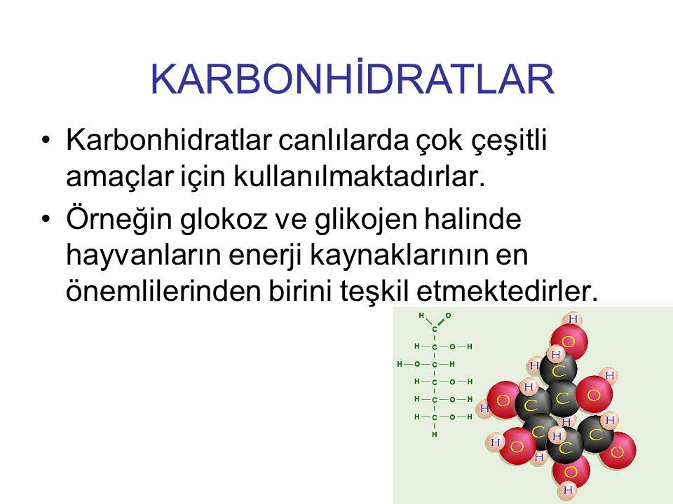 KARBONHİDRATLAR Karbonhidratlar canlılarda çok çeşitli amaçlar için kullanılmaktadırlar.