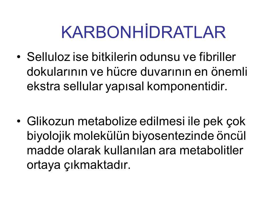 KARBONHİDRATLAR Selluloz ise bitkilerin odunsu ve fibriller dokularının ve hücre duvarının en önemli ekstra sellular yapısal komponentidir.