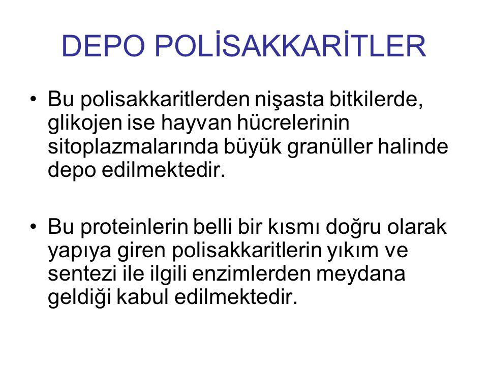 DEPO POLİSAKKARİTLER