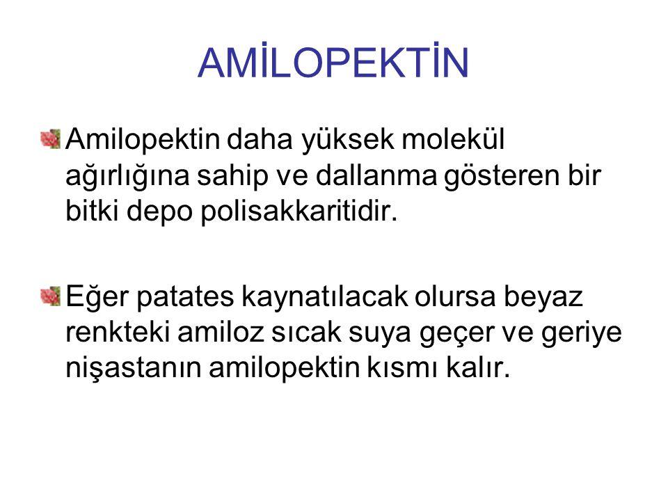 AMİLOPEKTİN Amilopektin daha yüksek molekül ağırlığına sahip ve dallanma gösteren bir bitki depo polisakkaritidir.