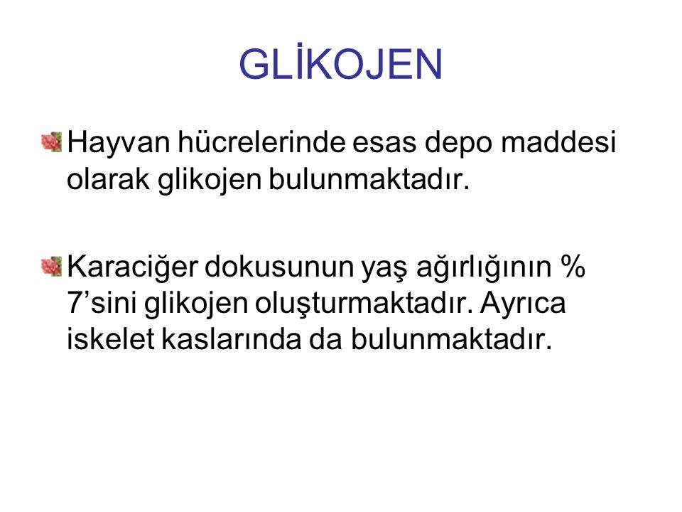 GLİKOJEN Hayvan hücrelerinde esas depo maddesi olarak glikojen bulunmaktadır.