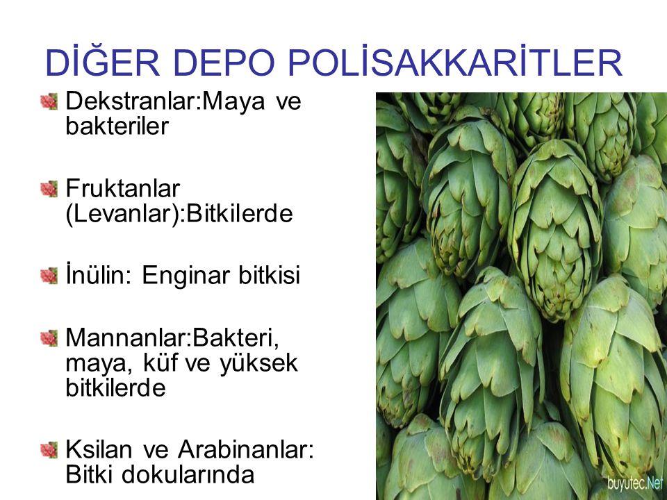 DİĞER DEPO POLİSAKKARİTLER