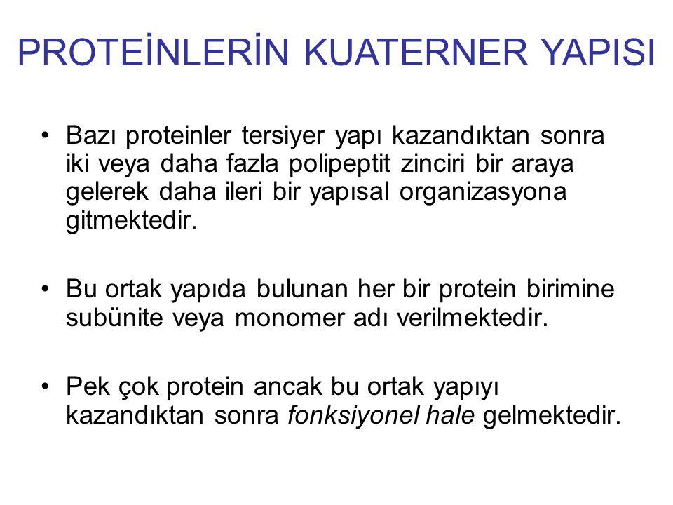 PROTEİNLERİN KUATERNER YAPISI