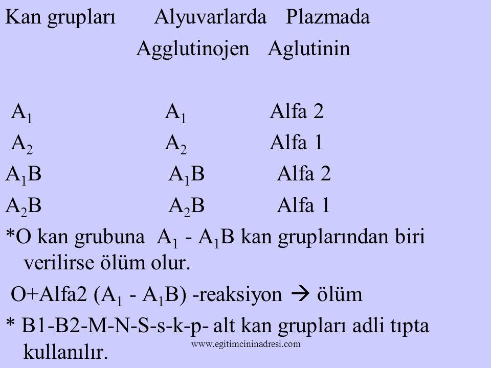 Kan grupları Alyuvarlarda Plazmada Agglutinojen Aglutinin A1 A1 Alfa 2