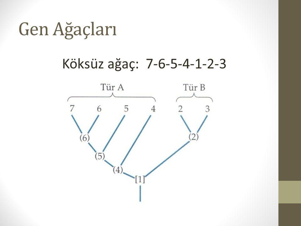 Gen Ağaçları Köksüz ağaç: 7-6-5-4-1-2-3