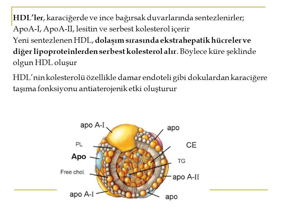 HDL'ler, karaciğerde ve ince bağırsak duvarlarında sentezlenirler; ApoA-I, ApoA-II, lesitin ve serbest kolesterol içerir