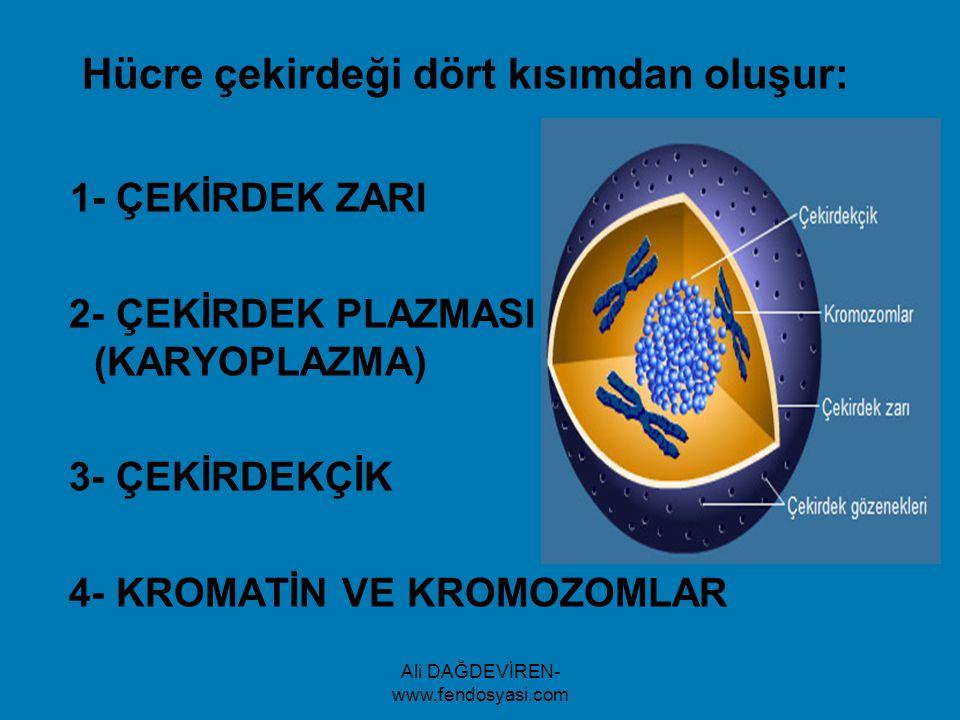 Ali DAĞDEVİREN- www.fendosyasi.com