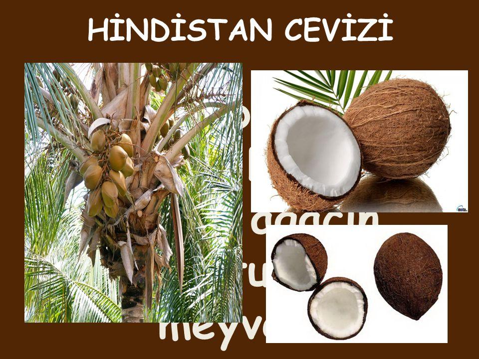 Tropikal bölgelerde yetişen bir ağaç ve bu ağacın kurutulmuş meyvesi.