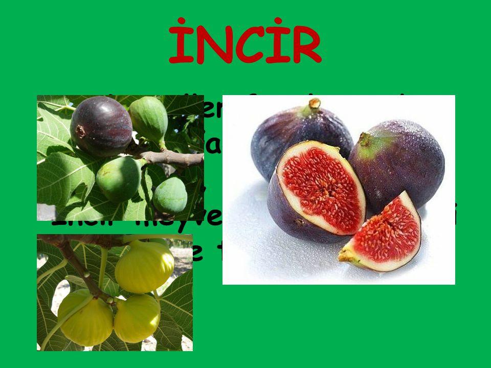 İNCİR Dutgiller familyasından meyve ağacı ve bu ağacın yumuşak, etli meyveleri.