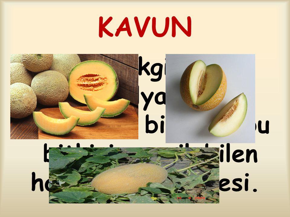 KAVUN Kabakgiller familyasının cinsinden bitki ve bu bitkinin yenilebilen hoş kokulu meyvesi.