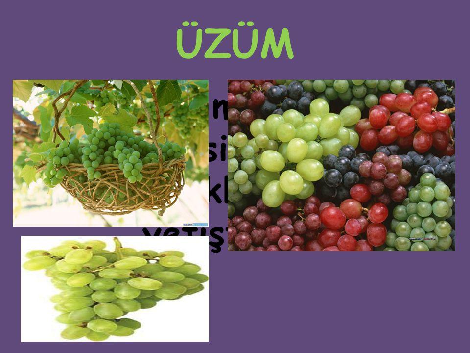 ÜZÜM Asmanın meyvelerine verilen isim. Üzümler genellikle asmada yetiştirilir.