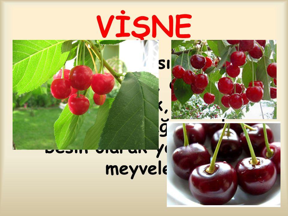 VİŞNE Gülgiller familyasından kiraza benzeyen, dalları kırmızımtırak, çiçekleri beyaz renkte ağaç ve bunun besin olarak yararlanılan meyveleri.