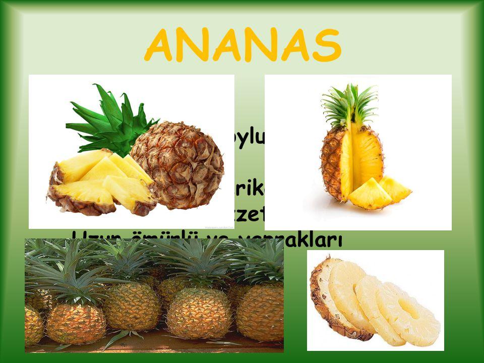 ANANAS Ananas, kısa boylu bir tarım bitkisidir.