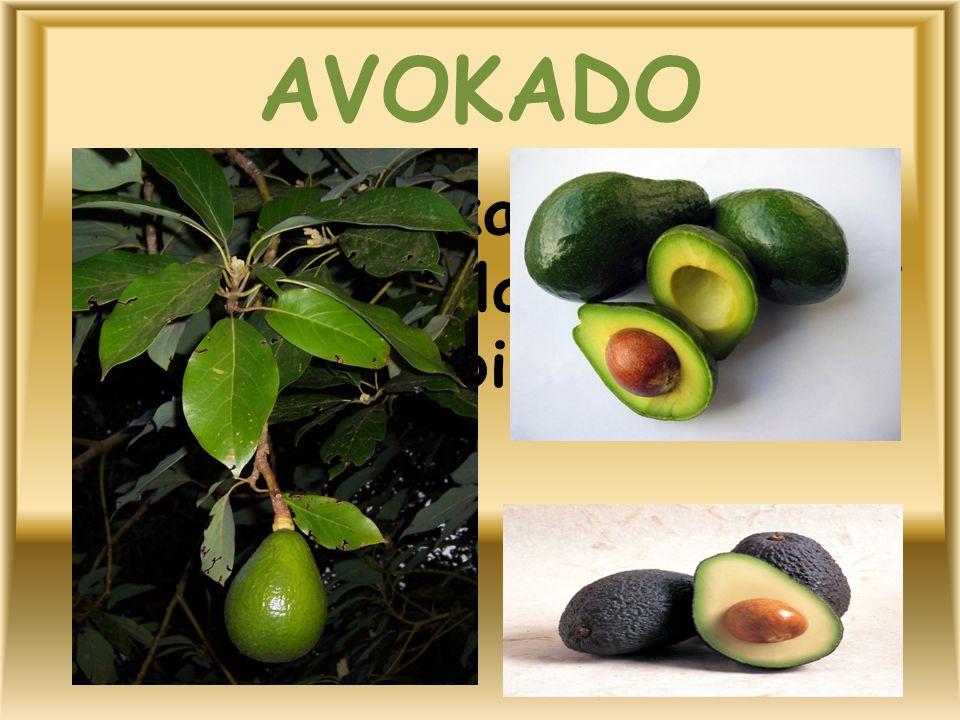 AVOKADO Avokado, kabuğu yeşil, yenen kısımları beyaz, iri çekirdekli bir meyvedir.