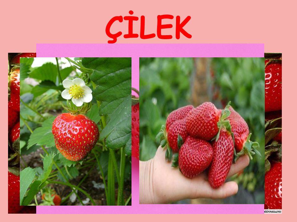 ÇİLEK Çiçekleri beyaz olan çileğin meyvesi kırmızı ve suludur. Çok yıllık bir bitkidir.