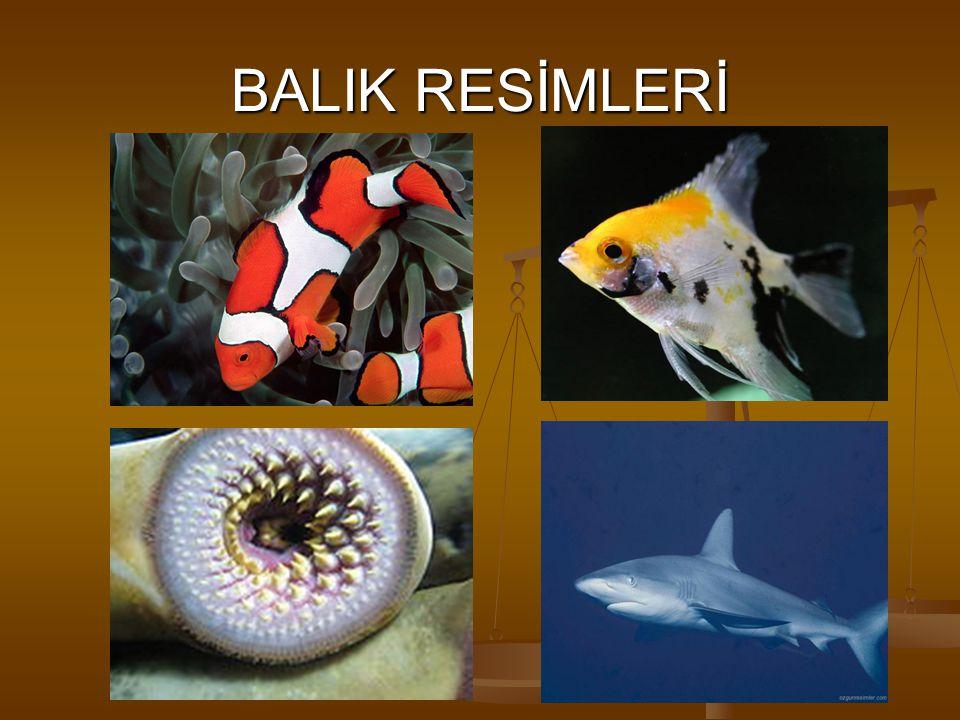 BALIK RESİMLERİ
