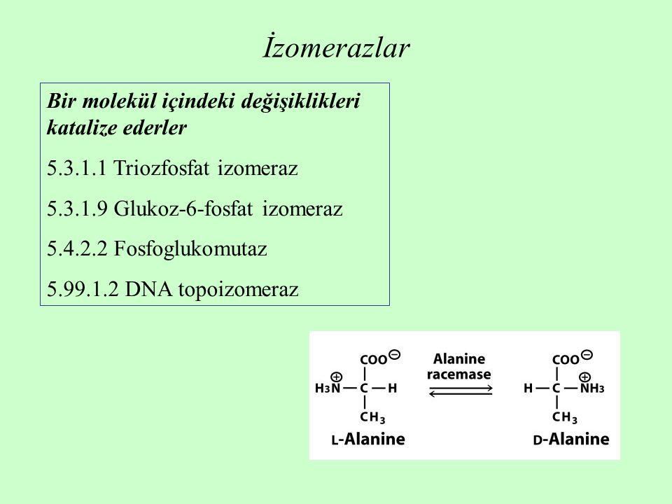 İzomerazlar Bir molekül içindeki değişiklikleri katalize ederler