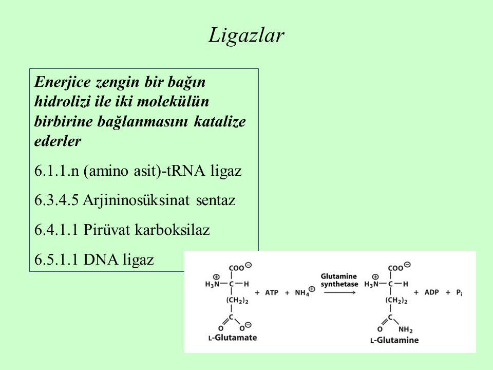 Ligazlar Enerjice zengin bir bağın hidrolizi ile iki molekülün birbirine bağlanmasını katalize ederler.