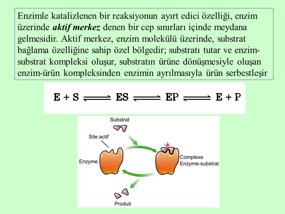 Enzimle katalizlenen bir reaksiyonun ayırt edici özelliği, enzim üzerinde aktif merkez denen bir cep sınırları içinde meydana gelmesidir.