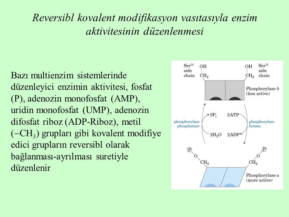 Reversibl kovalent modifikasyon vasıtasıyla enzim aktivitesinin düzenlenmesi