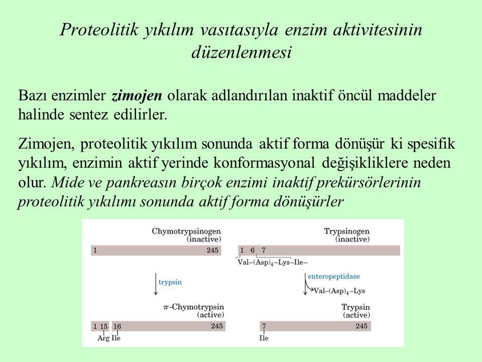 Proteolitik yıkılım vasıtasıyla enzim aktivitesinin düzenlenmesi
