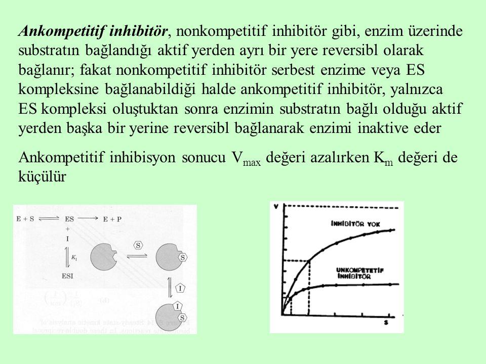 Ankompetitif inhibitör, nonkompetitif inhibitör gibi, enzim üzerinde substratın bağlandığı aktif yerden ayrı bir yere reversibl olarak bağlanır; fakat nonkompetitif inhibitör serbest enzime veya ES kompleksine bağlanabildiği halde ankompetitif inhibitör, yalnızca ES kompleksi oluştuktan sonra enzimin substratın bağlı olduğu aktif yerden başka bir yerine reversibl bağlanarak enzimi inaktive eder