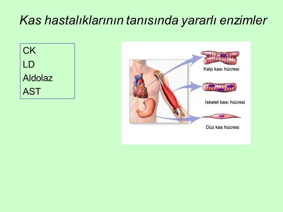 Kas hastalıklarının tanısında yararlı enzimler