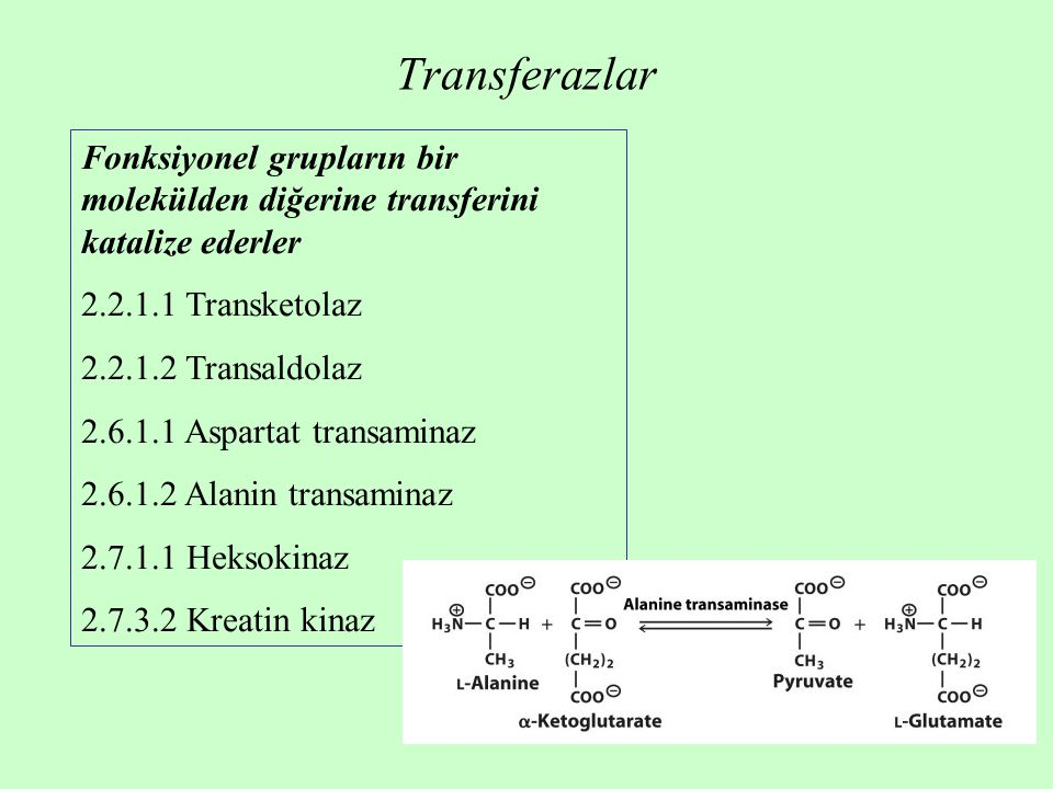 Transferazlar Fonksiyonel grupların bir molekülden diğerine transferini katalize ederler. 2.2.1.1 Transketolaz.