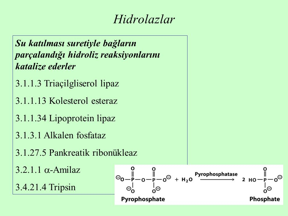 Hidrolazlar Su katılması suretiyle bağların parçalandığı hidroliz reaksiyonlarını katalize ederler.