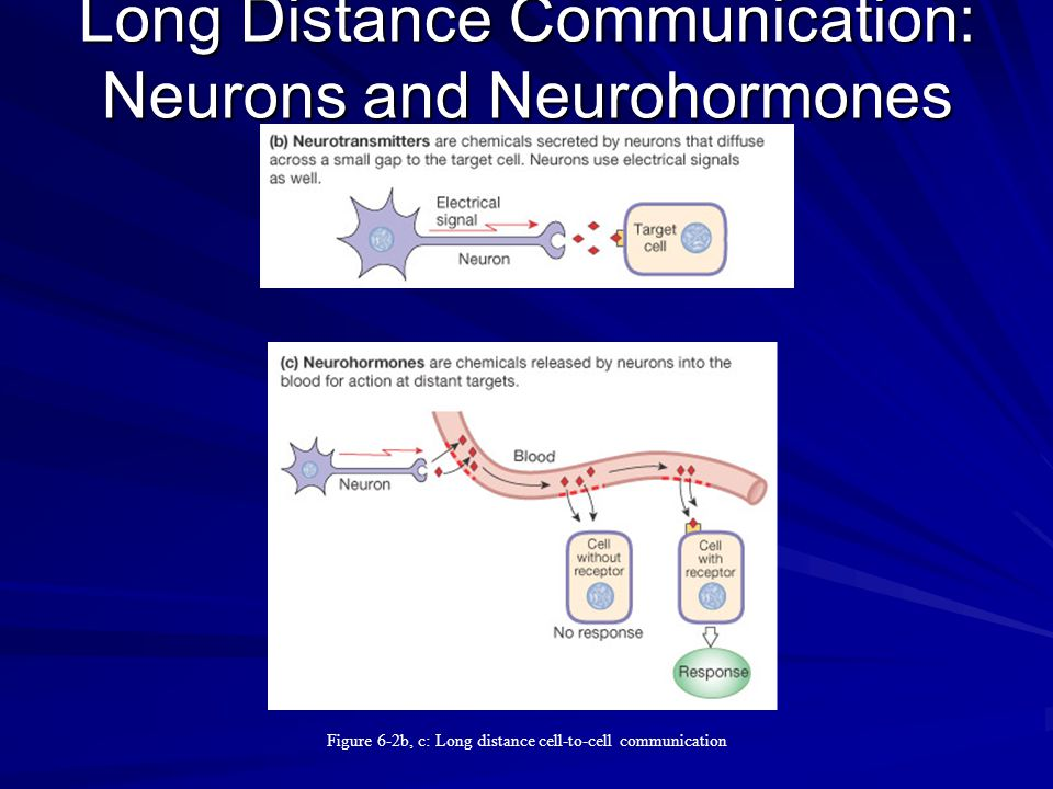 Long Distance Communication: Neurons and Neurohormones