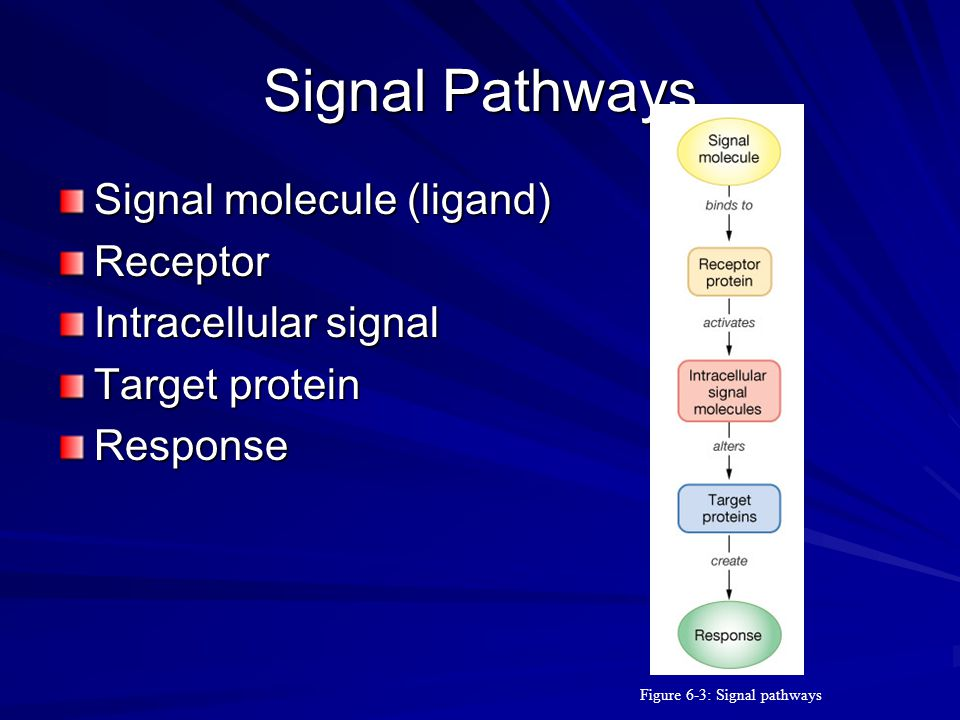 Figure 6-3: Signal pathways