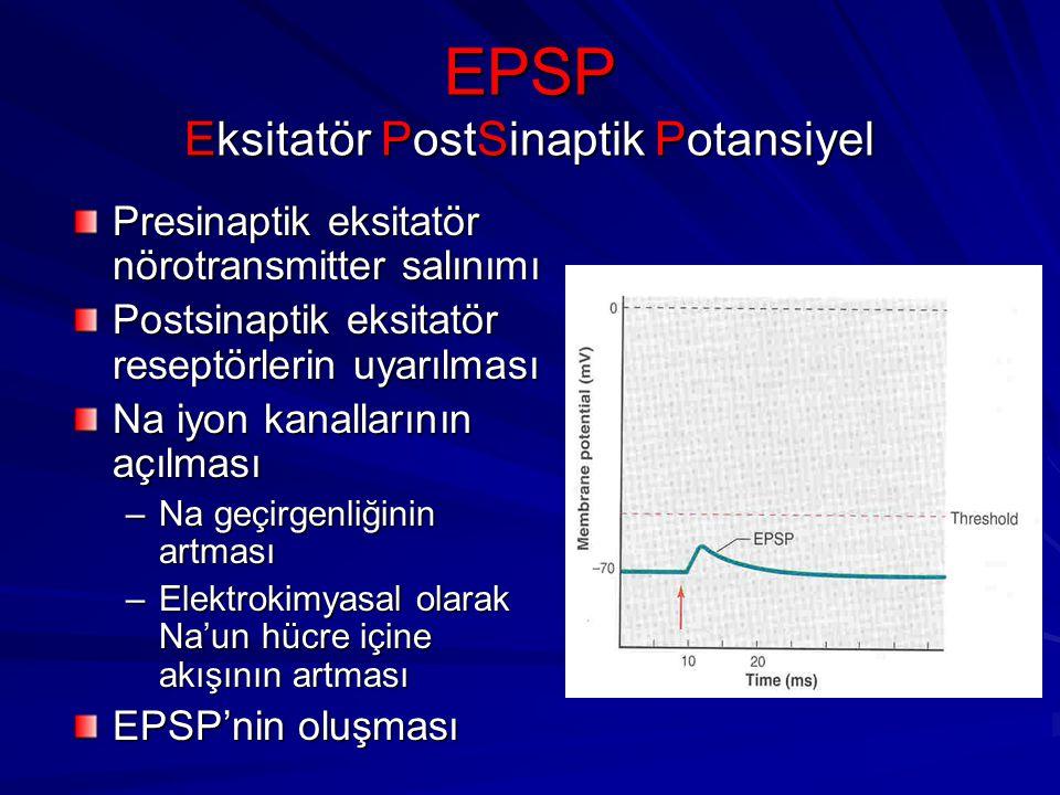 EPSP Eksitatör PostSinaptik Potansiyel