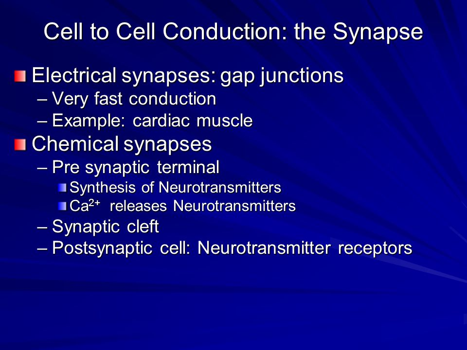 Cell to Cell Conduction: the Synapse