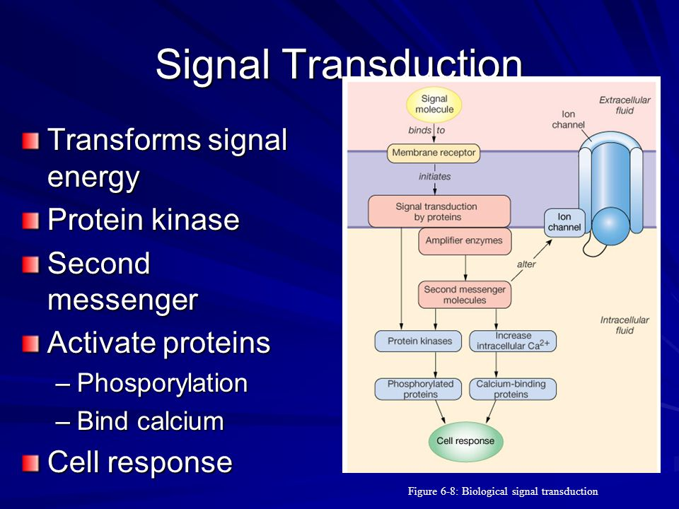 Figure 6-8: Biological signal transduction