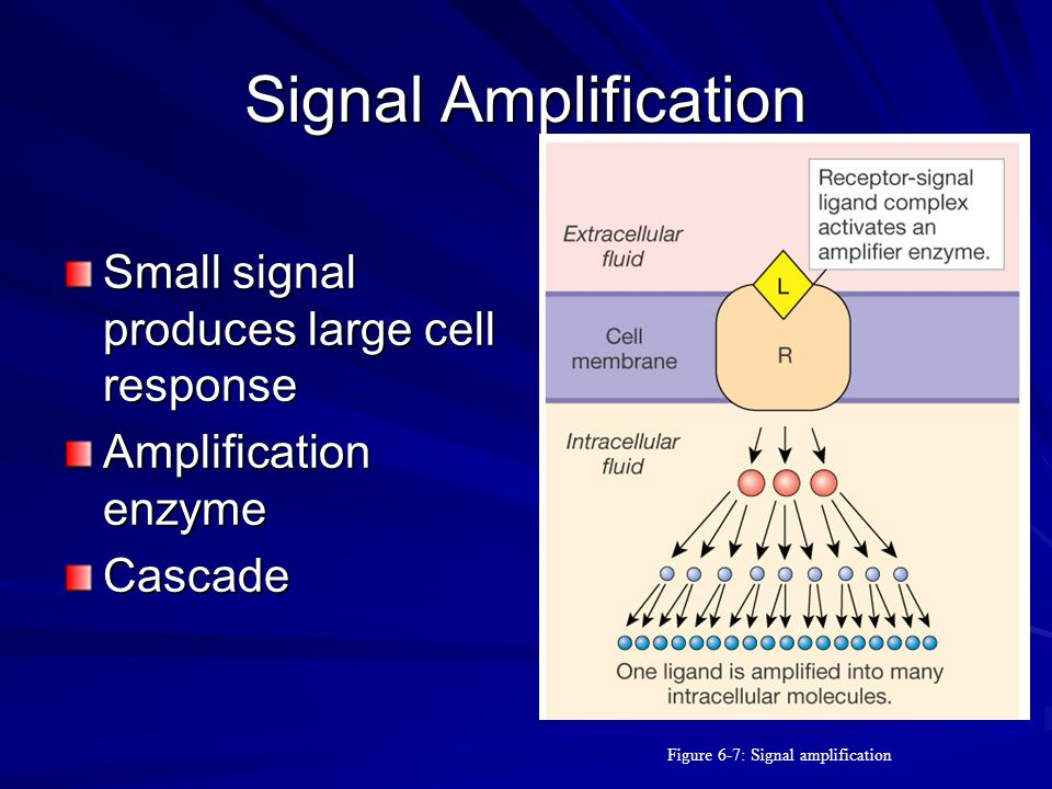 Figure 6-7: Signal amplification