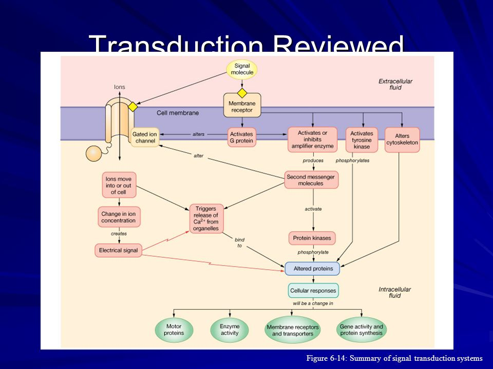 Transduction Reviewed