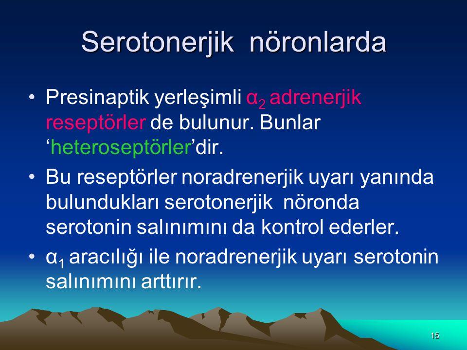 Serotonerjik nöronlarda