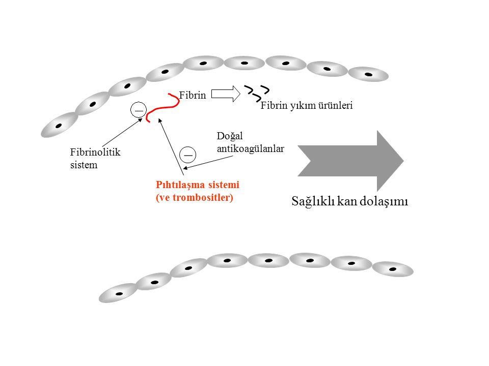 _ Sağlıklı kan dolaşımı Fibrin Fibrin yıkım ürünleri Doğal